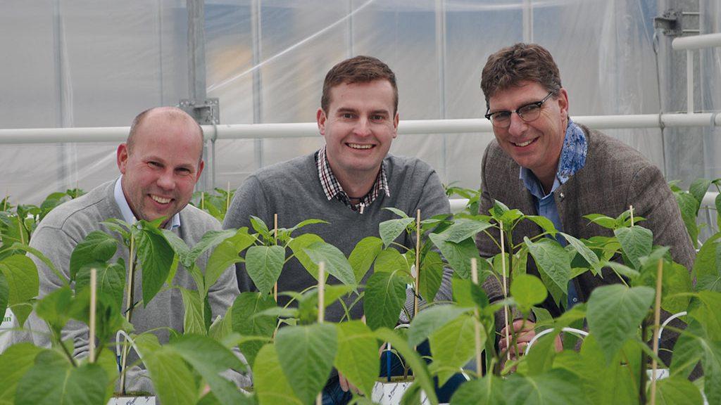 Im Gewächshaus unterstützt Kohlendioxid das Wachstum der Tulpen